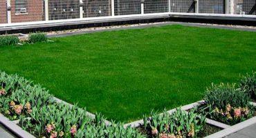Azoteas verdes: una alternativa viable para la ciudad