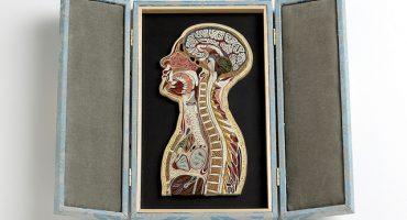 Increíbles filigranas de papel de figuras anatómicamente perfectas