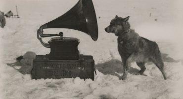 Canciones inspiradas por perros