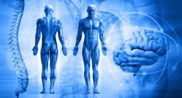 Aspectos sorprendentes que ignoras de tu cuerpo