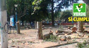 WTF?!?! PVEM postula a alcalde que aprobó tala de árboles