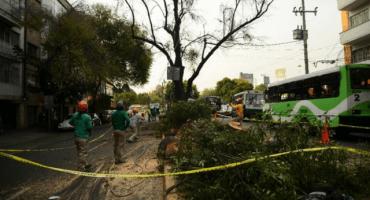 Talan más de 800 árboles en Mixcoac, vecinos se manifiestan