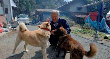 Hombre radioactivo alimenta animales olvidados en Fukushima