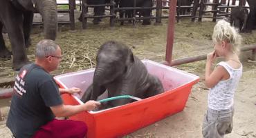 Un bebé elefante bañándose es todo lo que necesitan