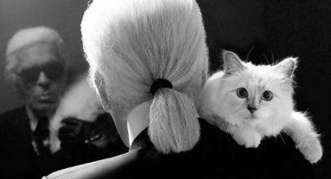 Naces, creces, un gato gana 3 millones de euros más que tú, mueres