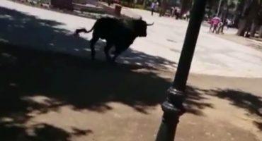 España: toro se escapa de plaza antes de festividad, 11 heridos