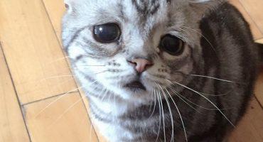 Conoce al gato con la expresión más triste de internet