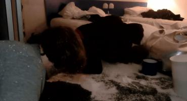 La histeria de recoger miles de bolitas de poliestireno en el video de Death Grips