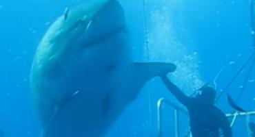 Captan en aguas mexicanas video tiburón blanco gigante
