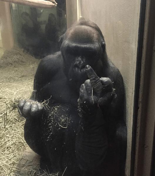 Es el fin: simios cada vez más parecidos a nosotros