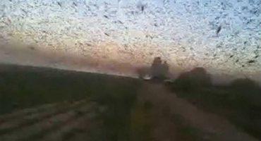La apocalíptica invasión de langostas en Argentina