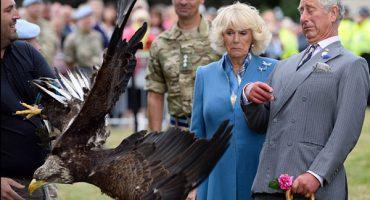 Águila ataca al Principe Carlos y se convierte en el meme de la semana