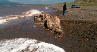 ¿Qué es esa extraña criatura que encontraron en Rusia?