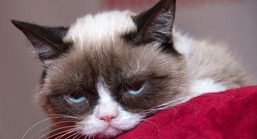 Museo de Nueva York abrirá exhibición dedicada a los gatos de internet