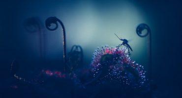 Increíbles macrofotografías de plantas carnívoras