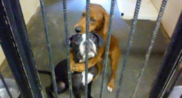 Awww!! Gracias a esta foto, perros salvan la vida y son adoptados