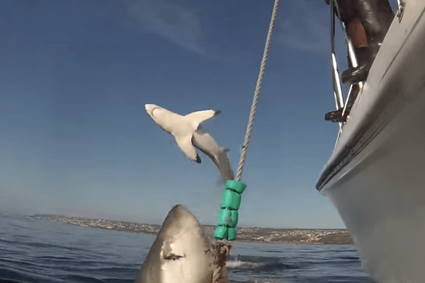 Tiburón da cátedra sobre cómo photobombear