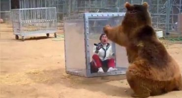 Diversión a la japonesa: Métete a un cubo y que te ataque un oso