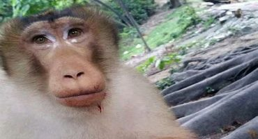 Esta cruel broma a un mono te hará perder la fe en la humanidad