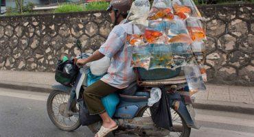 Imagenes que comprueban que TODO cabe en una moto, sabiendolo acomodar