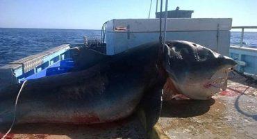 El tiburón que está dividiendo Australia