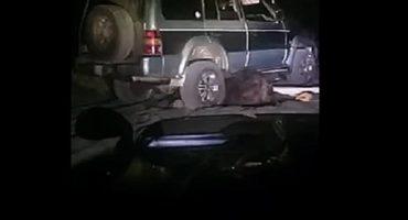 WTF!!?? Arrollaron ocho veces a oso... ¿y luego intentaron violarlo?