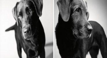 La transformación de estos perritos  te robará el corazón