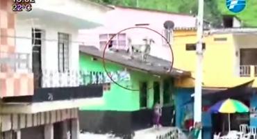 WTF?!?! El toro que apareció sobre el techo de una casa