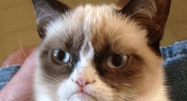 Grumpy Cat tendrá su propia figura de cera