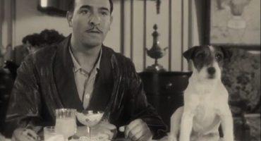 Muere Uggie, el perro de The Artist