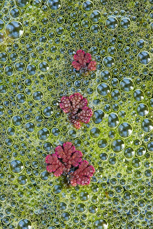 """Fairy Moss"" de Tim Hunt. Categoría: botánica británica."