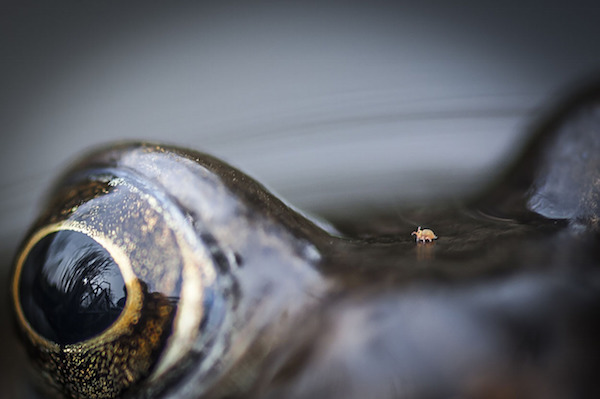 """""""Mite Walking in Frog Valley"""" de Chris Speller. Categoría: cerca de la naturaleza."""