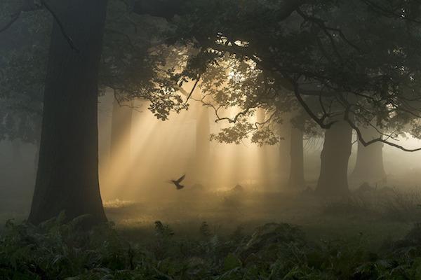 """A Flutter in the Woods"" de Chaitanya Deshpande. Categoría: bosque."