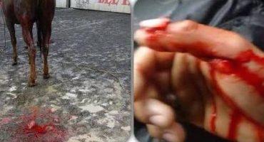 Funcionario del PRI mutila genitales de caballo porque 'le mordió la mano'