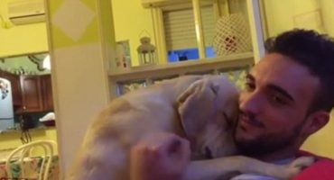 Derrítanse con Ettore, un perrito que le pide perdón a su dueño