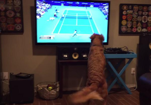 Este perrito viendo el US Open es una maravilla