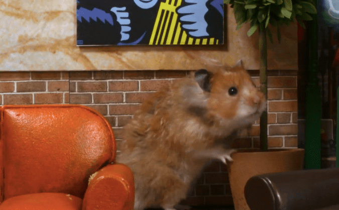 Awww ternuringa! La entrada de Friends hecha con hamsters
