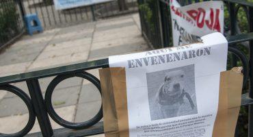 PGJDF catea casa de la supuesta asesina de perros en la Condesa