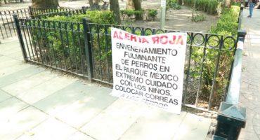 Una mujer de 75 años, supuesta asesina de perros en la Condesa.