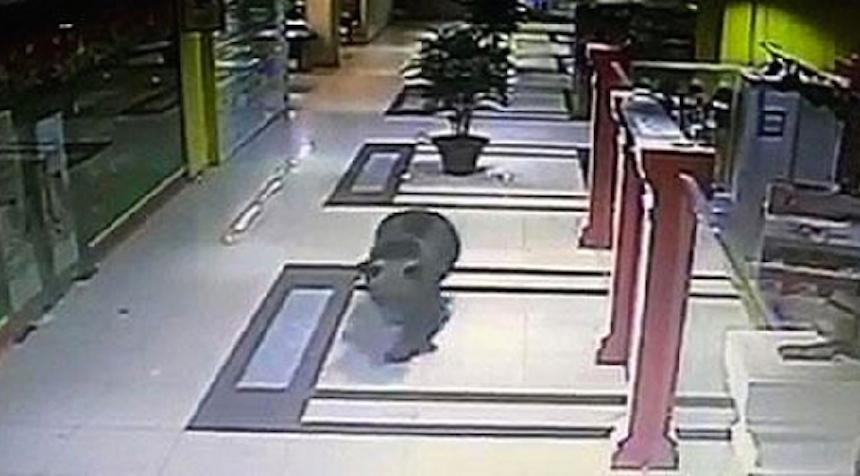 Un oso se mete a un centro comercial y lo matan a tiros
