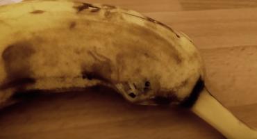 Aaaarghhhhh!!!!! con lo que vivía dentro de este plátano