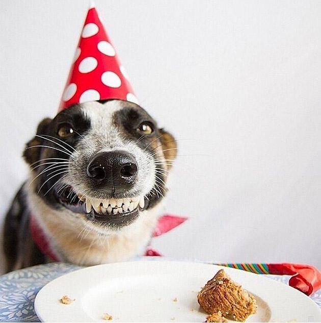 Perrito se emociona por su pastel de cumpleaños