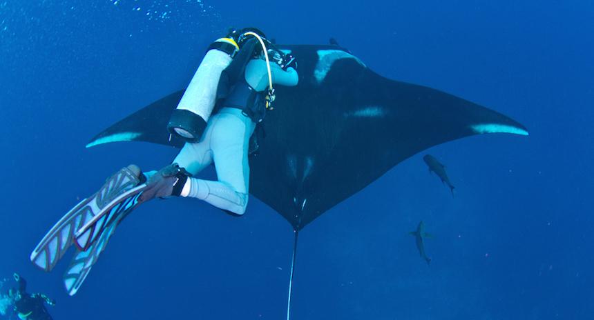 Conoce al mexicano fotógrafo de tiburones