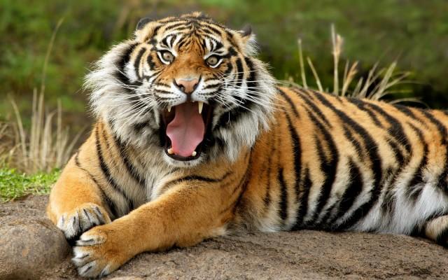 Los 10 Animales Más Peligrosos Para El Ser Humano