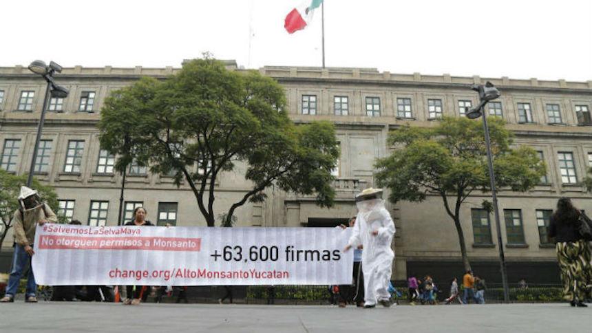 Suprema Corte revierte a Monsanto permiso para sembrar soya transgenica