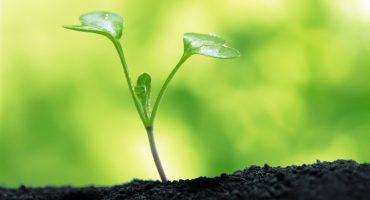 Estas plantas ayudan a purificar el ambiente, según la NASA