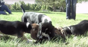 Ciencia adorable: Nacen primeros perritos de probeta