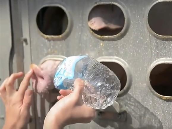 Mujer podría ir 10 años a la cárcel por darle agua a puercos en día caluroso