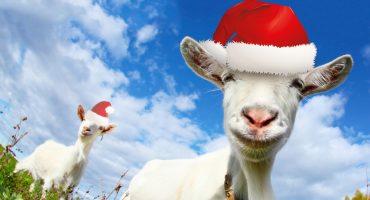 WTF?!?! Villancicos cantados por ¿cabras? , la sensación de esta navidad