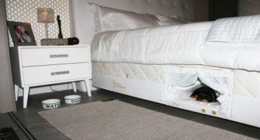 La cama que todos los amantes de las mascotas necesitan